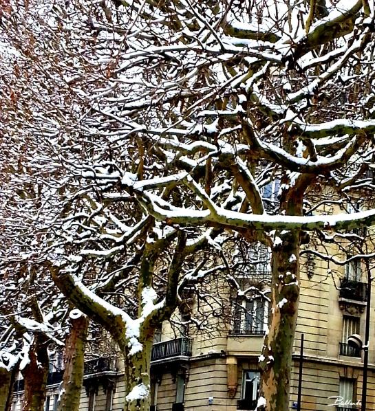 Paris snow signed