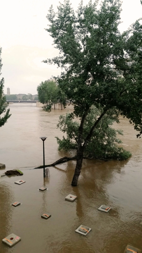 Paris flood fallen tree